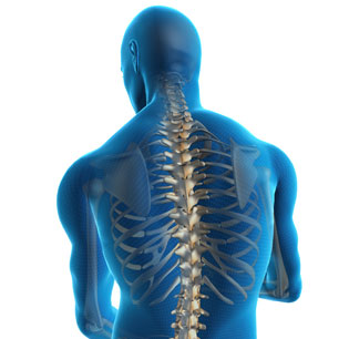 spinal-cord-illustration-renton